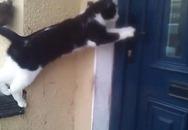Hài hước xem chú mèo mở cửa